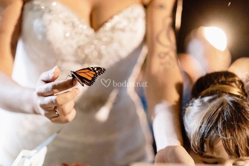 Mariposa en la boda
