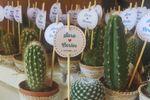 Mini cactus personalizados