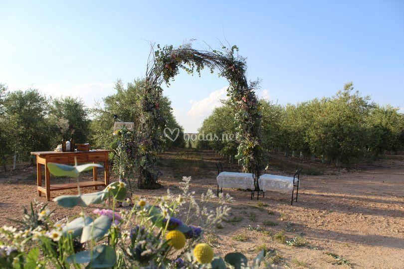 Ceremonia entre Olivos