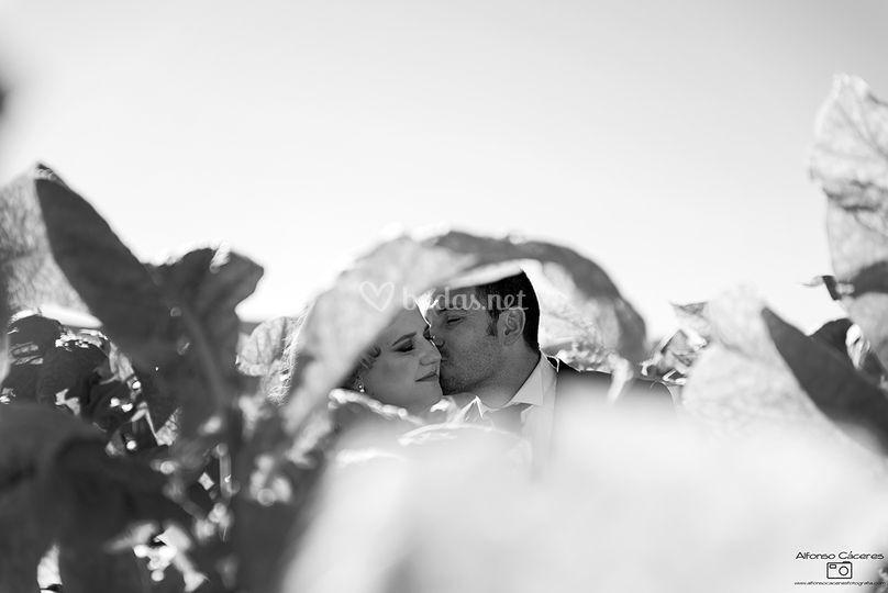 Alfonso Cáceres Fotografía