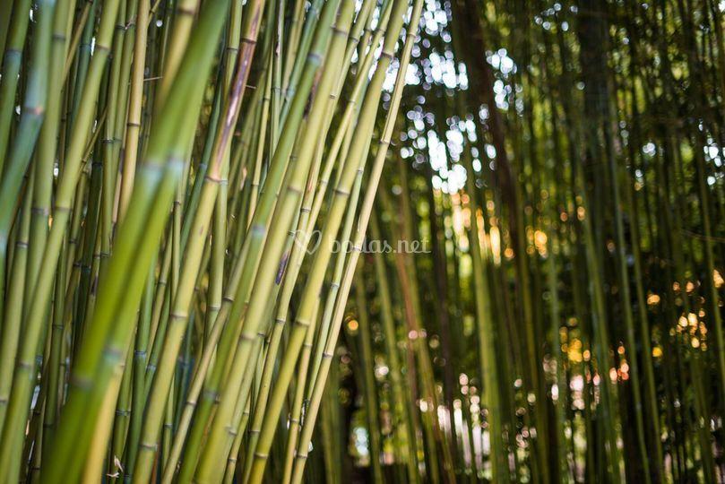 Nuestro bambú