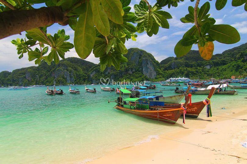 Samui (Thailandia)