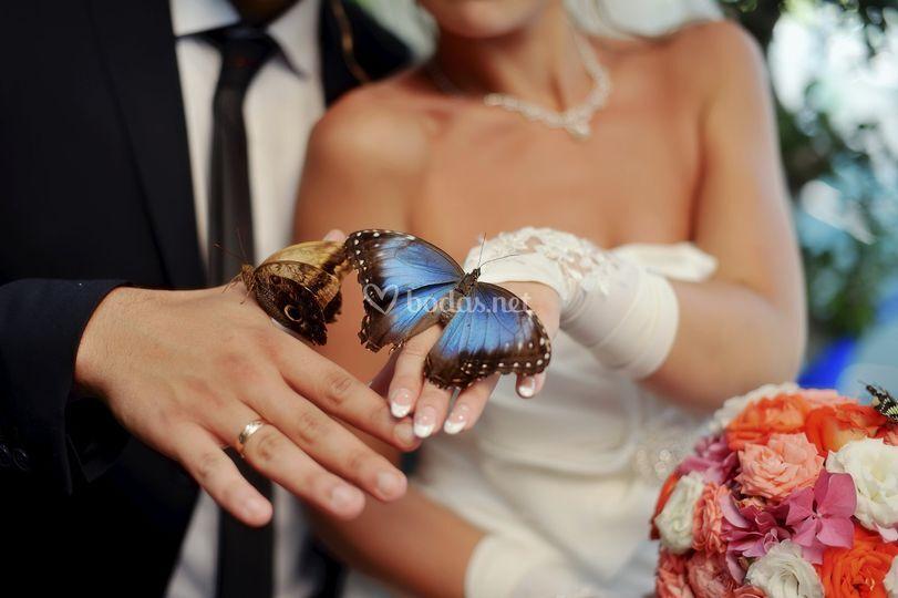 Mariposas para fotografía
