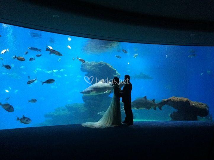 Casarse entre tiburones