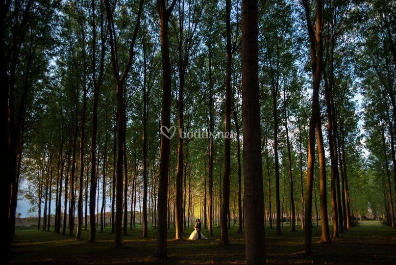 Sesión en el bosque