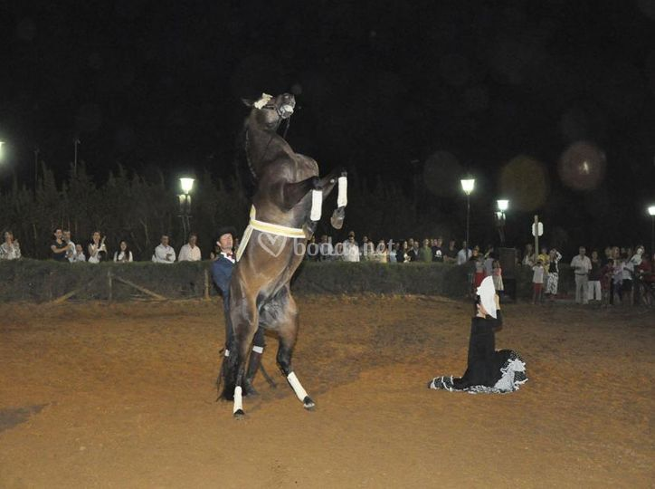 Actuación de flamenco y caballo