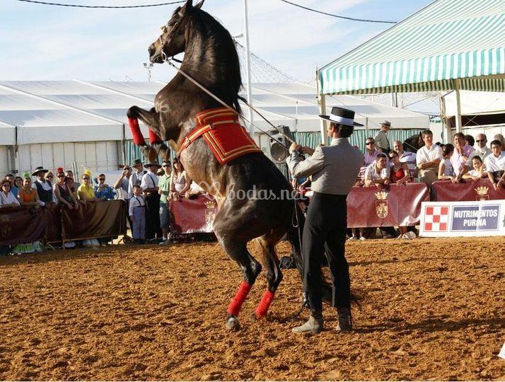 Feria Chiclana de la Frontera