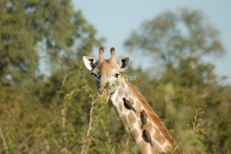 Parque Nacional Kruger en Sudáfrica