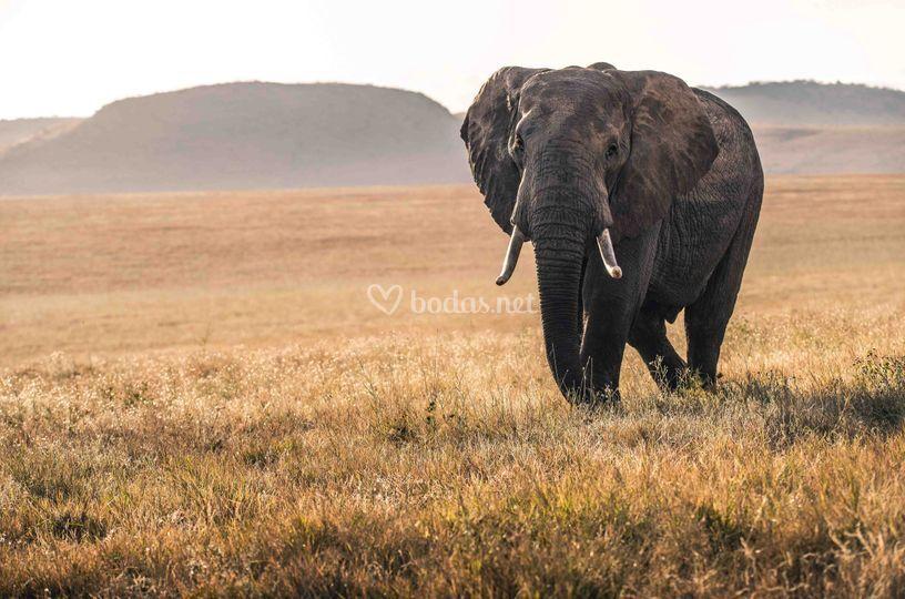 Serengueti en Tanzania