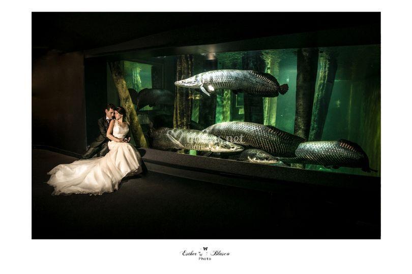 El acuario principal