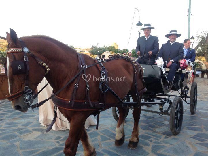 Carro caballos