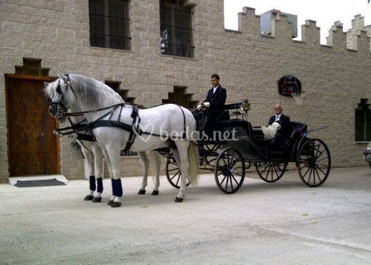 Alquiler de carruaje y caballo