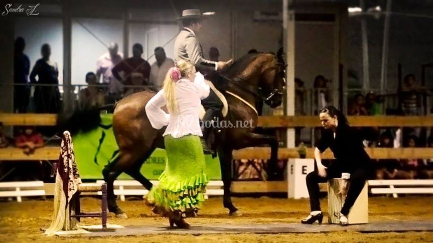 Flamenco ecuestre
