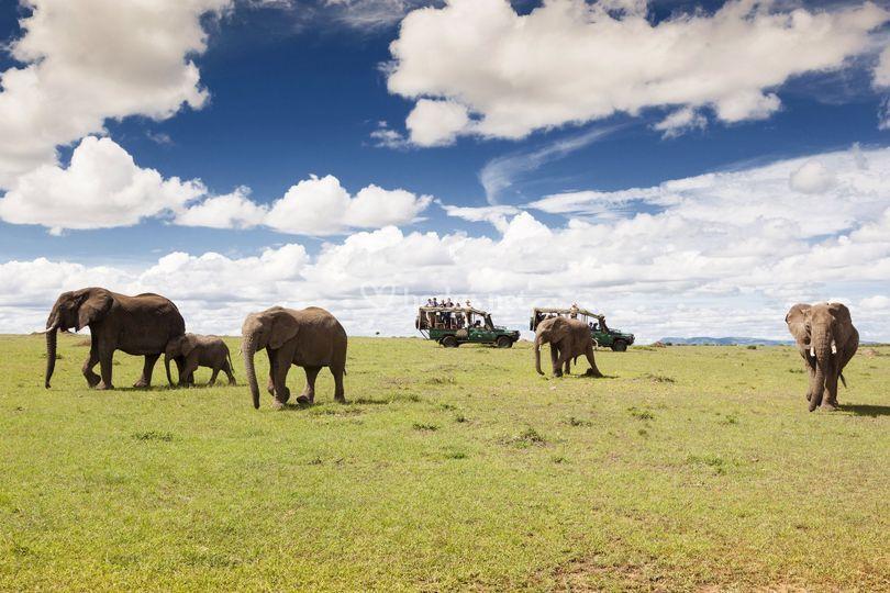 Safari en 4x4 en Kenia