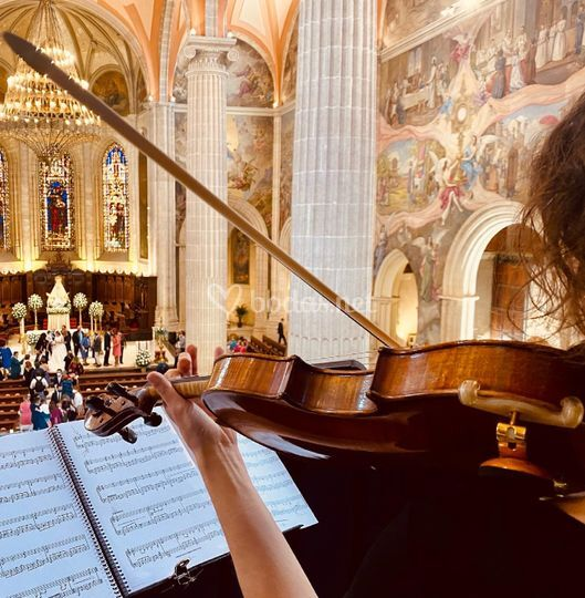 Violín en Catedral