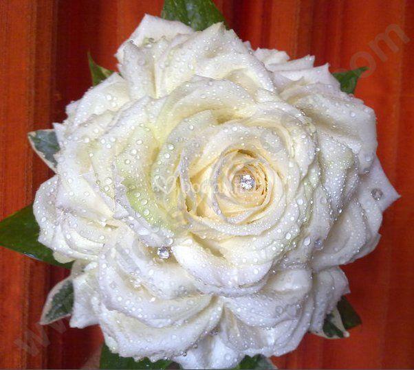 Una sola flor, la más bonita