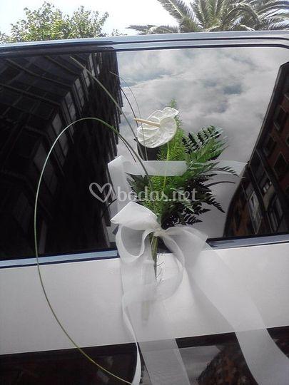 Manilla anthurium blanco