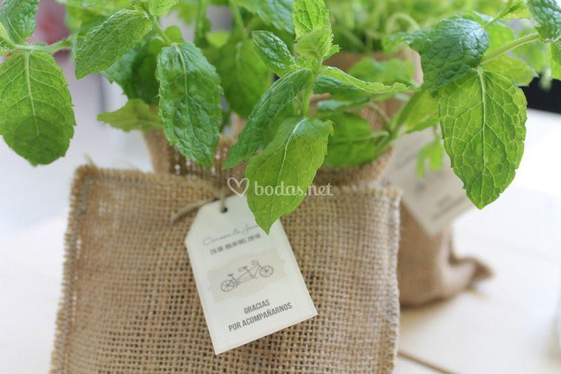 Hasta en un igl - Plantar hierbas aromaticas ...