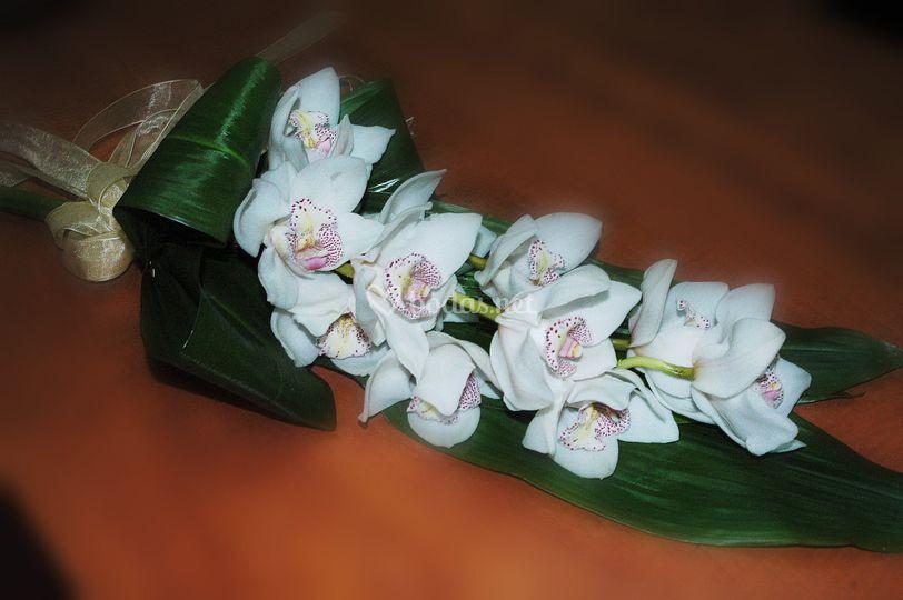 Vara de orquídeas