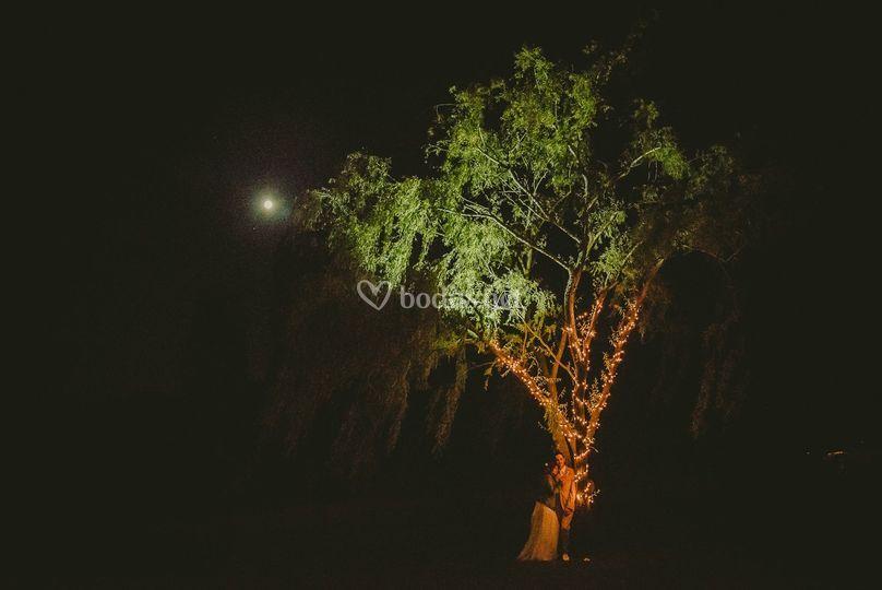 Soñando a la luz de la luna