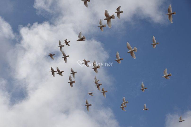Palomas Volando Al Atardecer De óscar Molina Suelta De Palomas