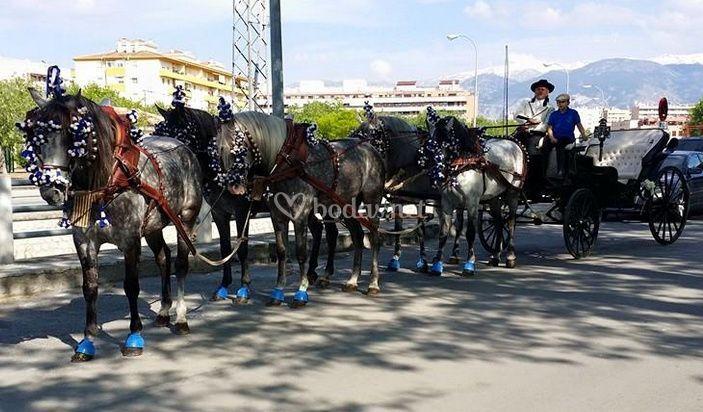 Lindos caballos
