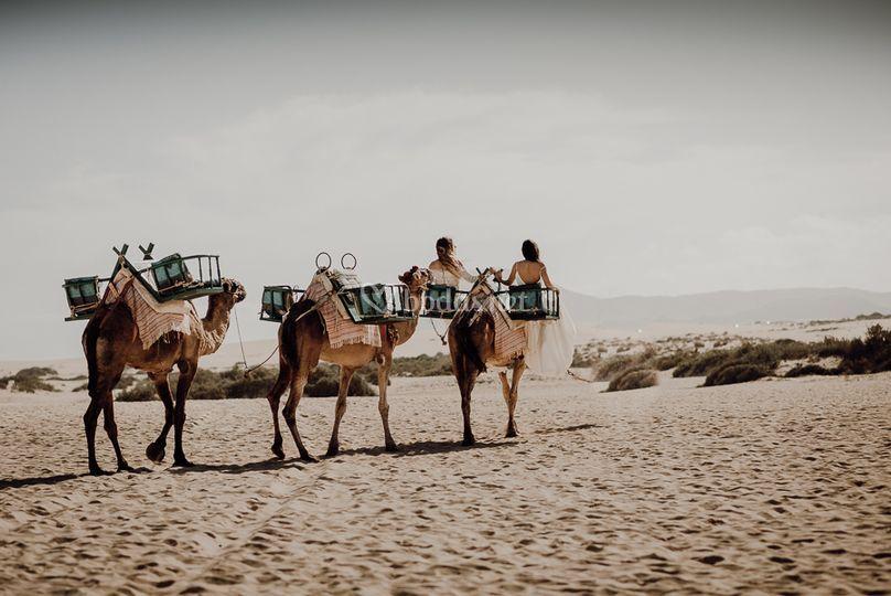 Una boda a Camello