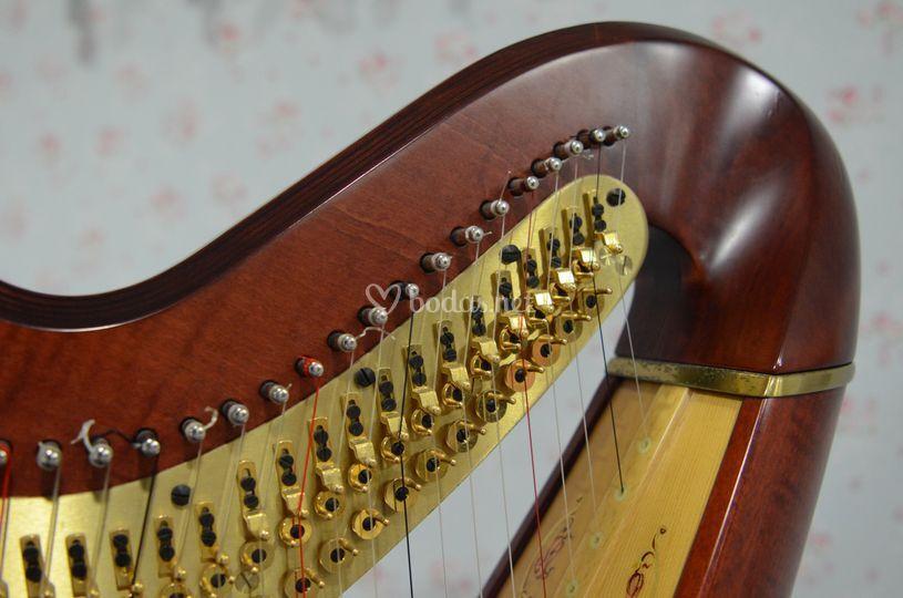 Belleza del instrumento
