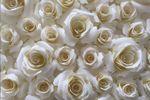 Rosas de papel varios tamaños