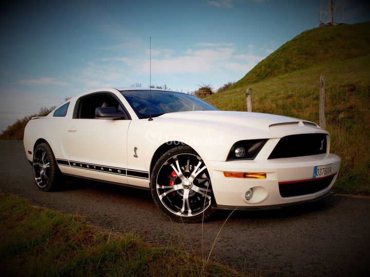 Zesna - Ford Mustang