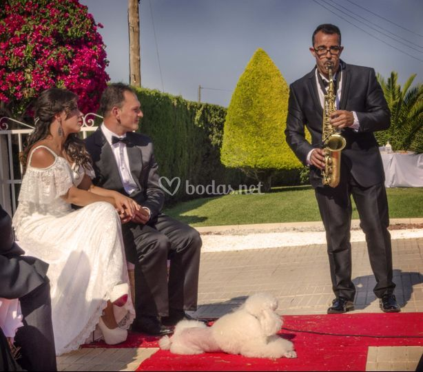 Servicio saxofonista directo