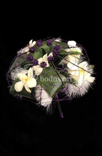 Dendrobium con pluma y estructura