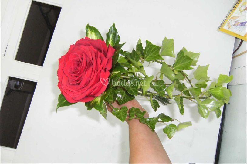 Rosmelia roja