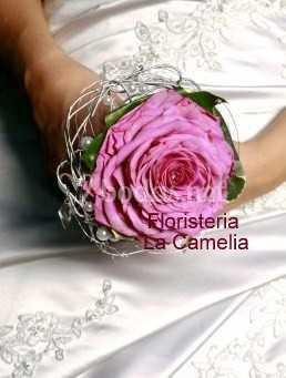 Rosmelia Rosa