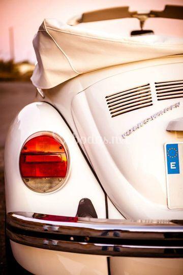 Escarabajo precioso