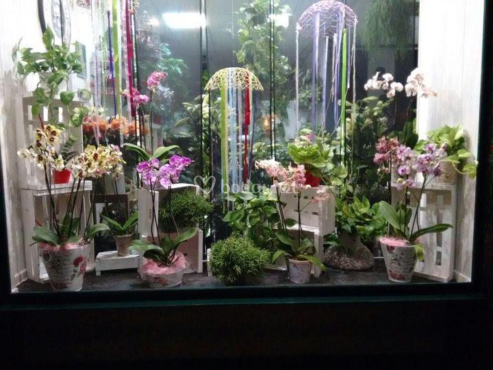 Escarapate floral