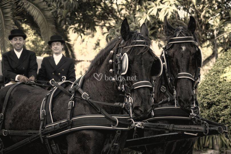Espectaculares caballos