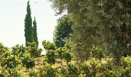 Bodegas y Viñedos Casa del Valle 1