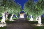 Paseo del olivar de Bodegas y Vi�edos Casa del Valle