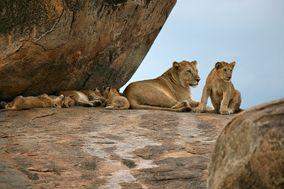 Get in África Safaris
