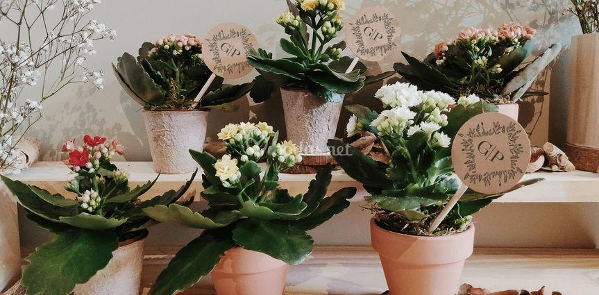 Plantas de flor