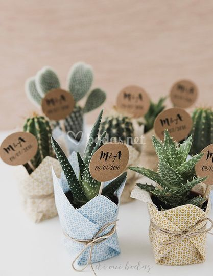 Detalles Invitados cactus