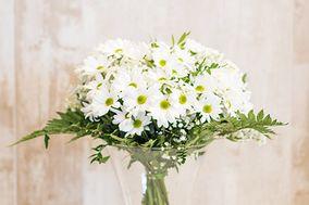 Flores de Cavia