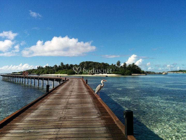 Maldivas de Viajes a tu gusto