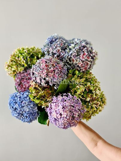 Hortensias bouquet.
