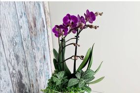 Maidavel flowers and home