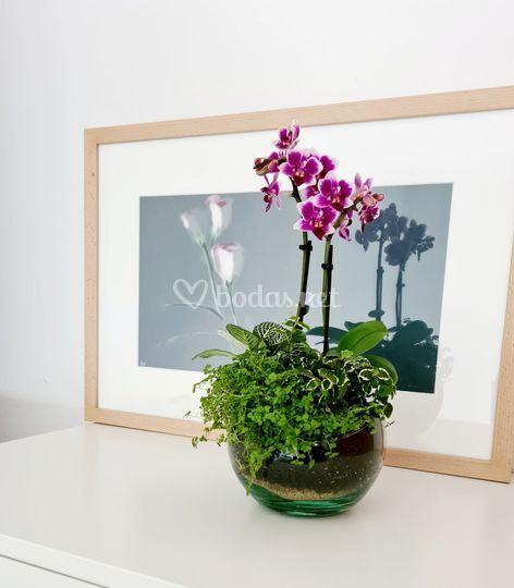 Arreglo orquídea pequeña.