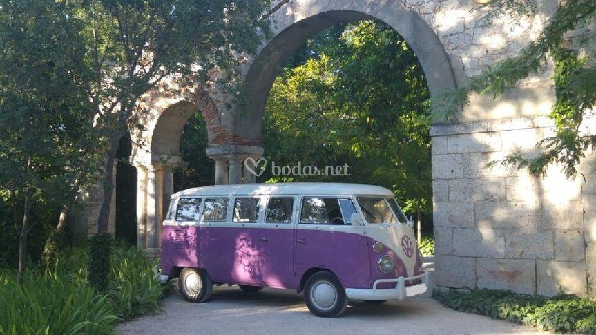 VW T1 Violeta