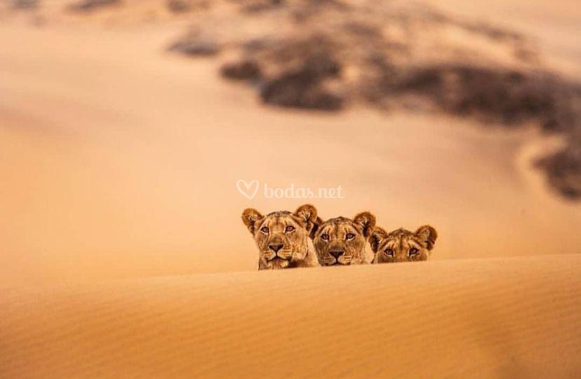 Especialistas en Safaris