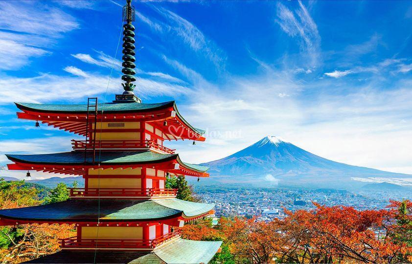 29 Japón